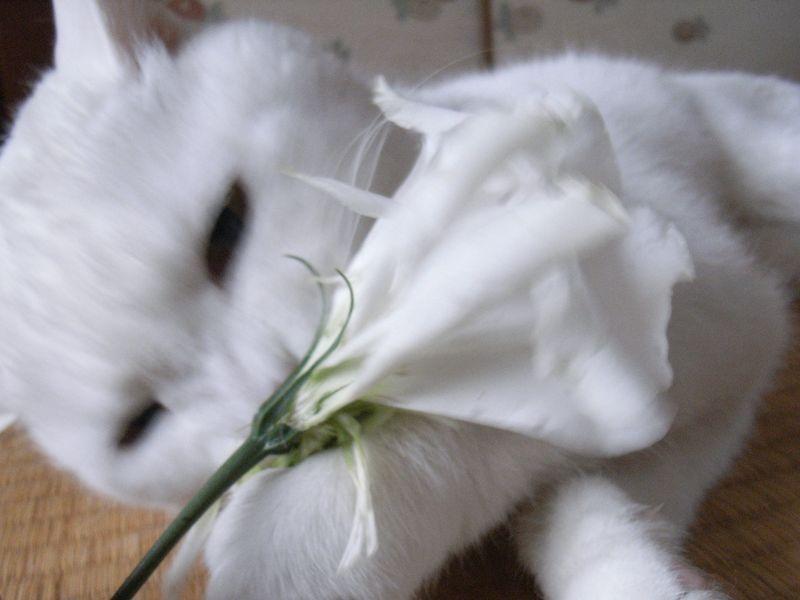 大雪とトルコキキョウを食べるネコ_c0025115_23254394.jpg