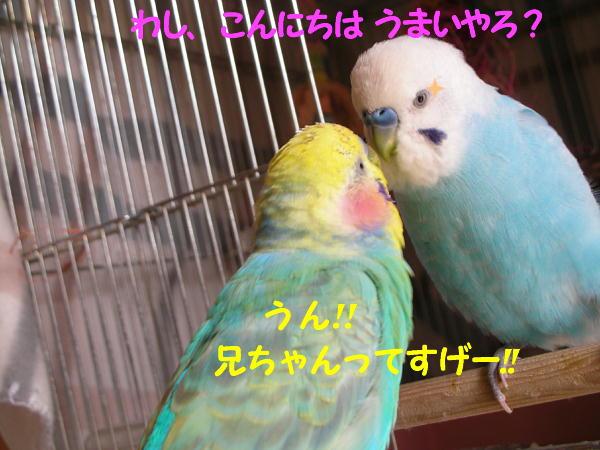 f0132055_0314482.jpg
