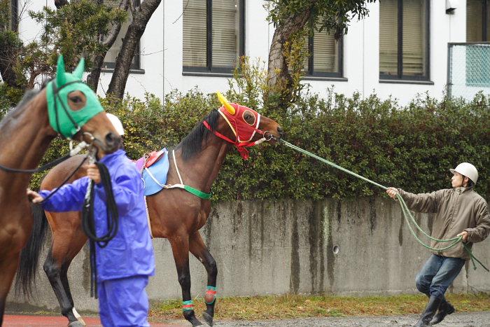 2008年1月20日(日) 高知競馬 1R_a0077663_16495456.jpg