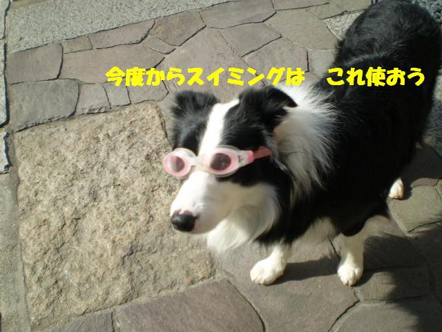 e0117976_1340669.jpg