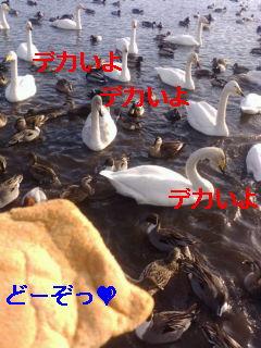 f0126418_11383313.jpg