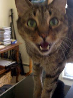 猫ストーカー_f0064823_252880.jpg