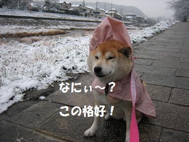 お寒うございます。_c0049950_21261426.jpg