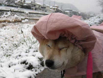 お寒うございます。_c0049950_21501850.jpg