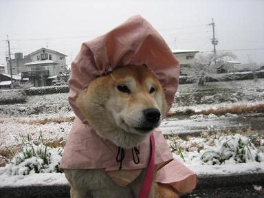 お寒うございます。_c0049950_22424250.jpg