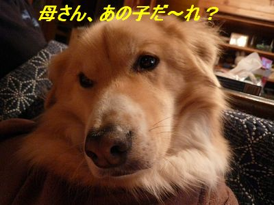a0100160_19525771.jpg