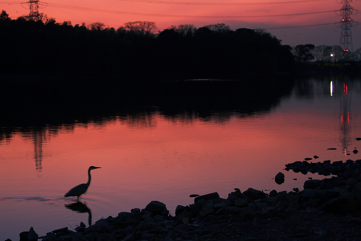 鷺<a heron> 2_f0021869_2125639.jpg