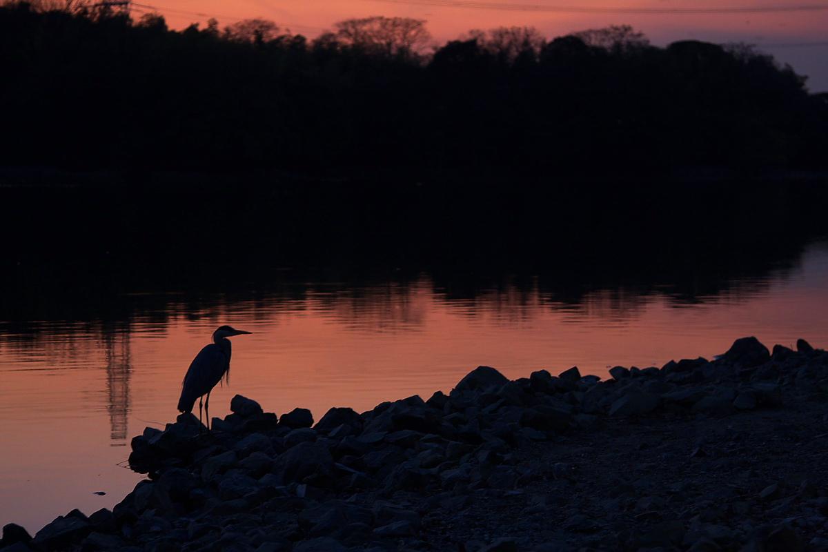 鷺<a heron> 2_f0021869_2131587.jpg