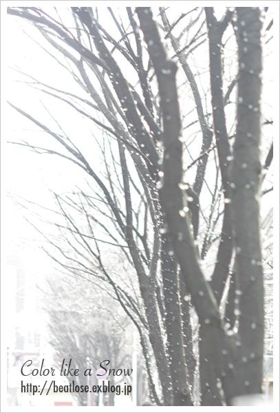 Snow??_b0081177_23432555.jpg