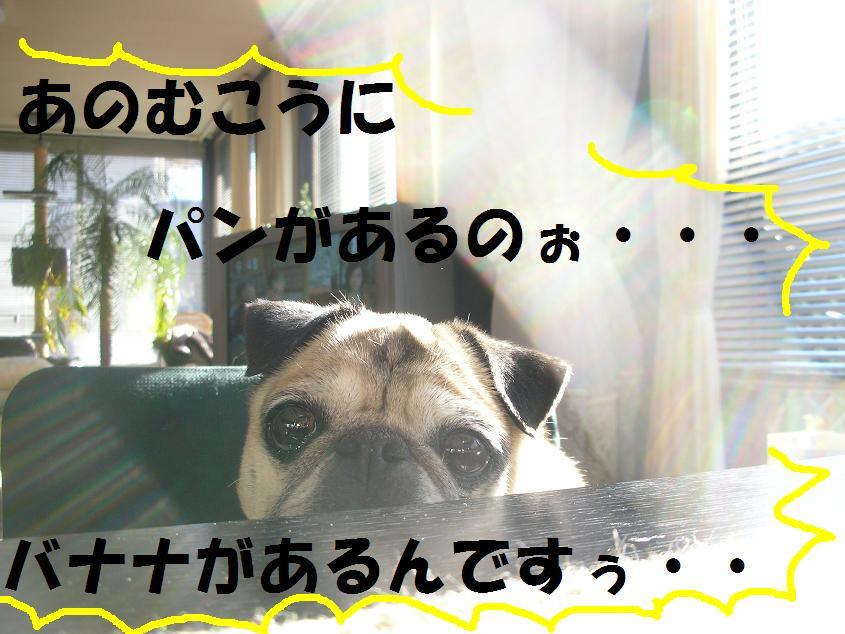 c0139488_155116.jpg