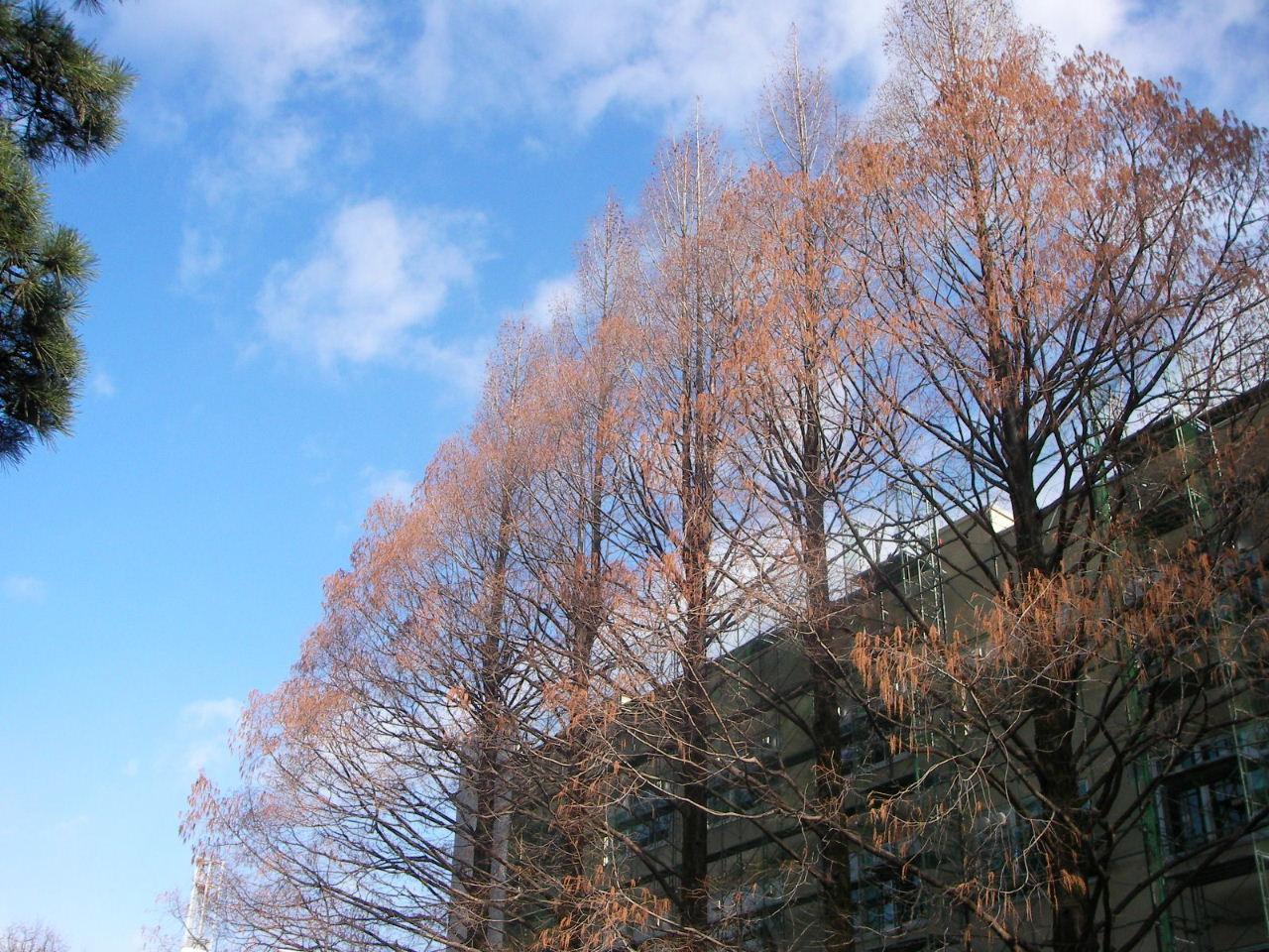 冬の広瀬川散策 (片平~評定河原橋)_f0100593_14191135.jpg