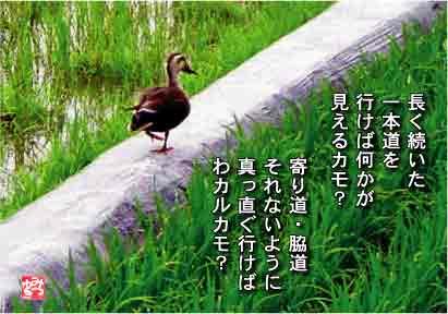 b0092707_6382973.jpg