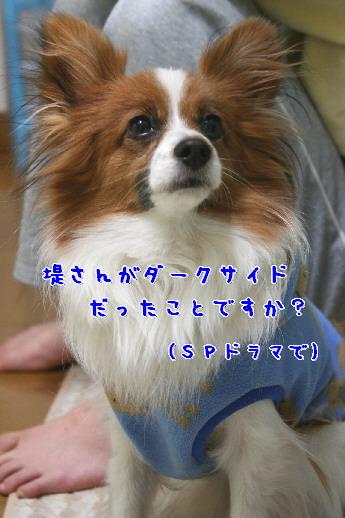 d0013149_92143.jpg