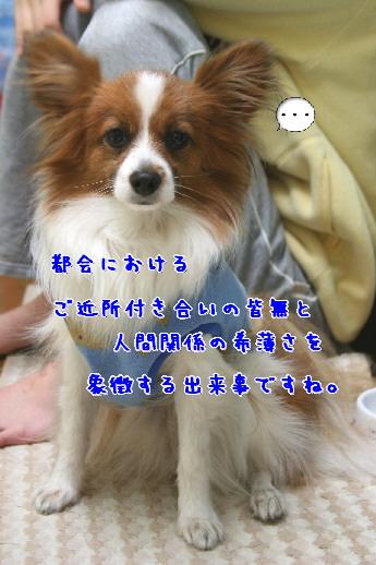 d0013149_9231530.jpg
