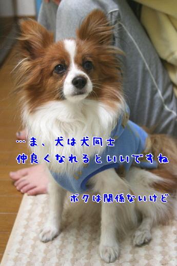 d0013149_9421357.jpg
