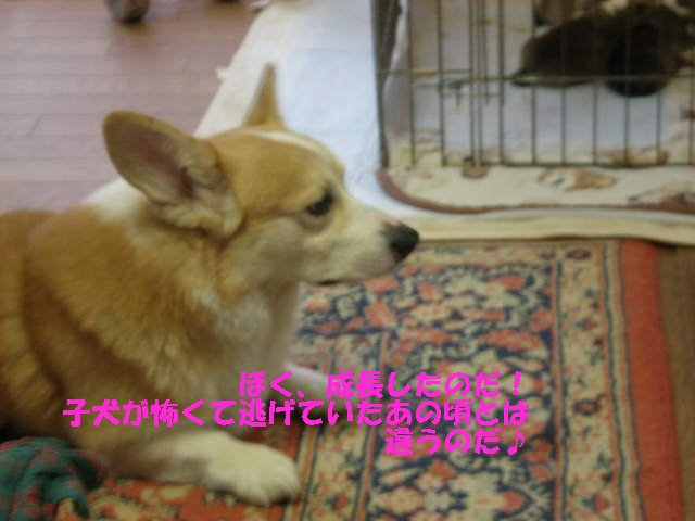 a0085464_20251977.jpg