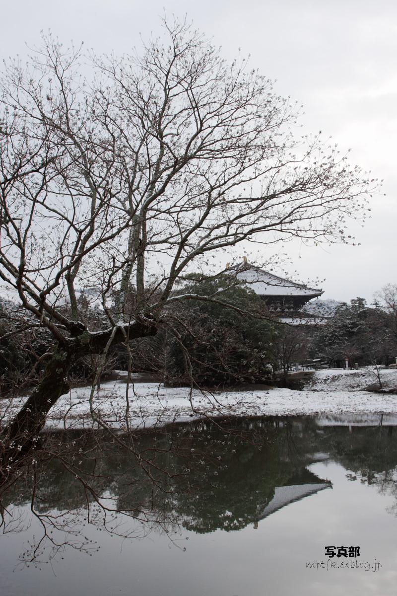 奈良公園 雪景色 _f0021869_1219090.jpg
