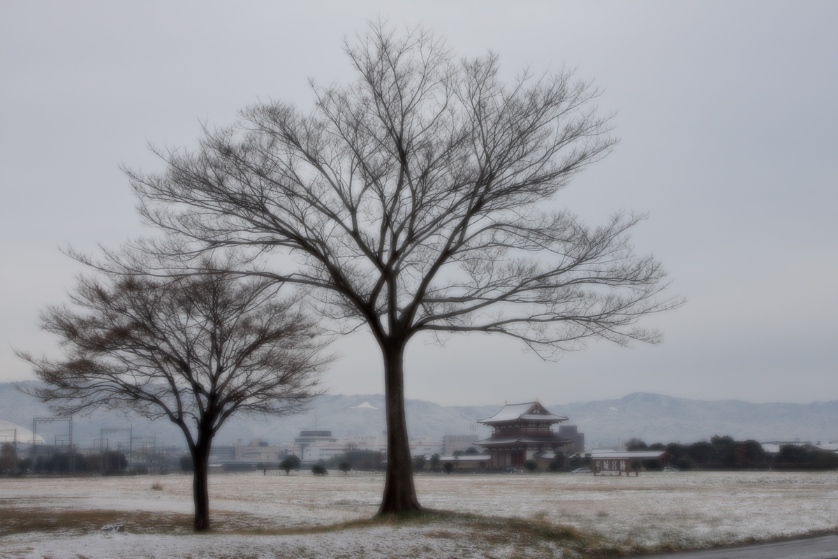 奈良公園 雪景色 _f0021869_12232858.jpg