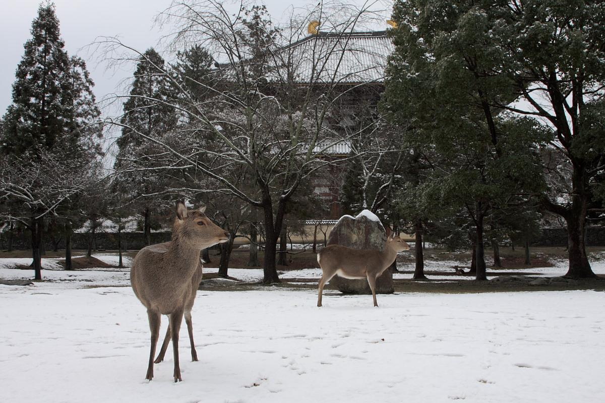 奈良公園 雪景色 _f0021869_12271190.jpg