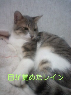 b0112380_216552.jpg