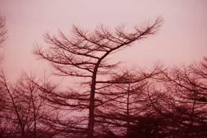 静寂の朝のひととき_e0120896_7191293.jpg