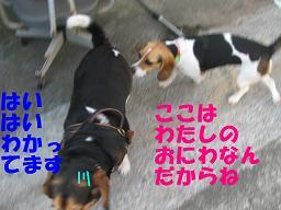d0104209_1956379.jpg