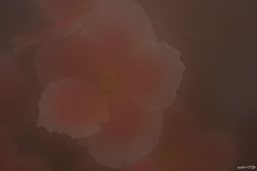 a0104324_4491122.jpg