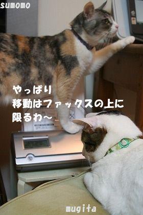 これで安心♪_f0063729_2214558.jpg