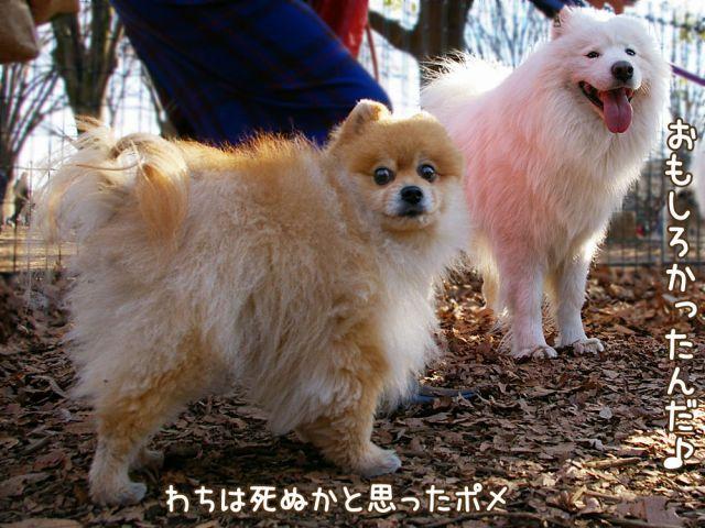 勇者への道_c0062832_1822671.jpg