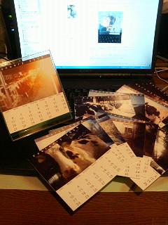 牛カレンダー2008年版。_b0047734_17344029.jpg