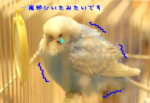 d0013149_8215925.jpg