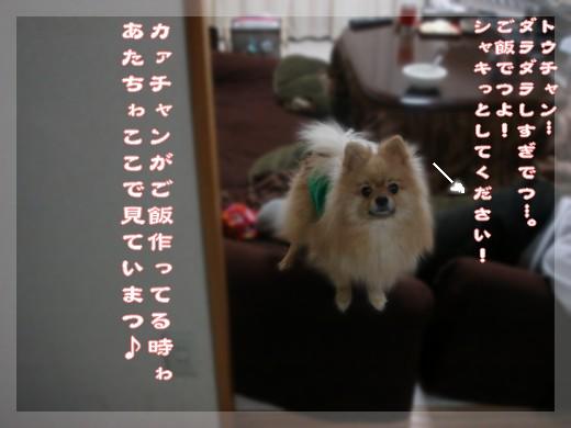b0078073_13364963.jpg