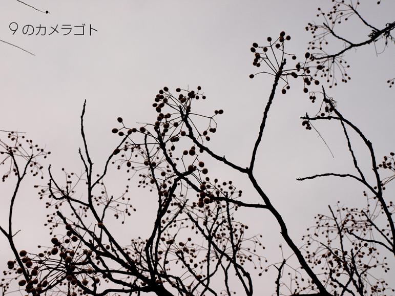 f0157679_0373320.jpg