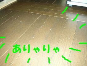 c0139488_15431075.jpg