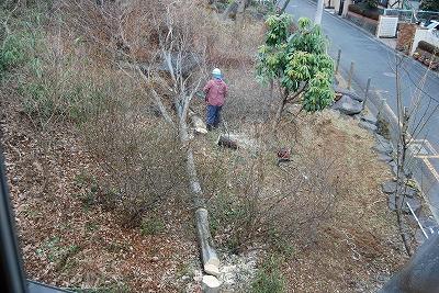周囲の伐採が終わり…_c0124100_1753172.jpg