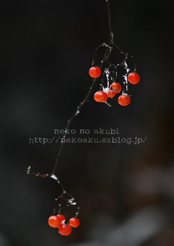 b0003512_1841085.jpg