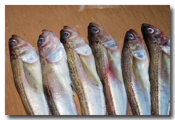 魚の捌き方「つぼ抜き」です......... ハタハタ(鰰)を捌いてみました!_d0069838_13103644.jpg