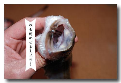 魚の捌き方「つぼ抜き」です......... ハタハタ(鰰)を捌いてみました!_d0069838_1323090.jpg