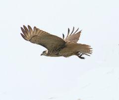 taking off_f0114339_21112225.jpg
