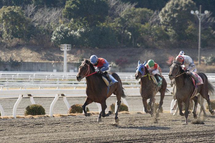 2008年1月1日(火) 高知競馬 2R_a0077663_1814926.jpg