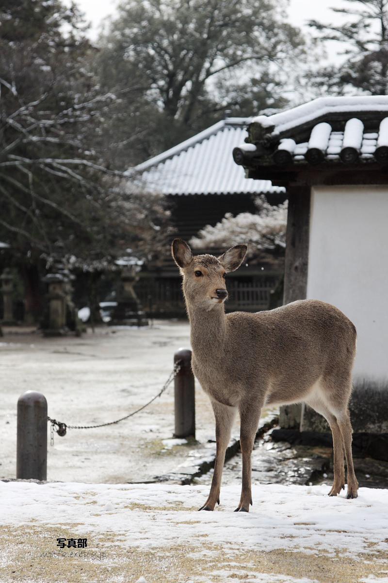 奈良 東大寺二月堂 雪景色 4_f0021869_1114449.jpg