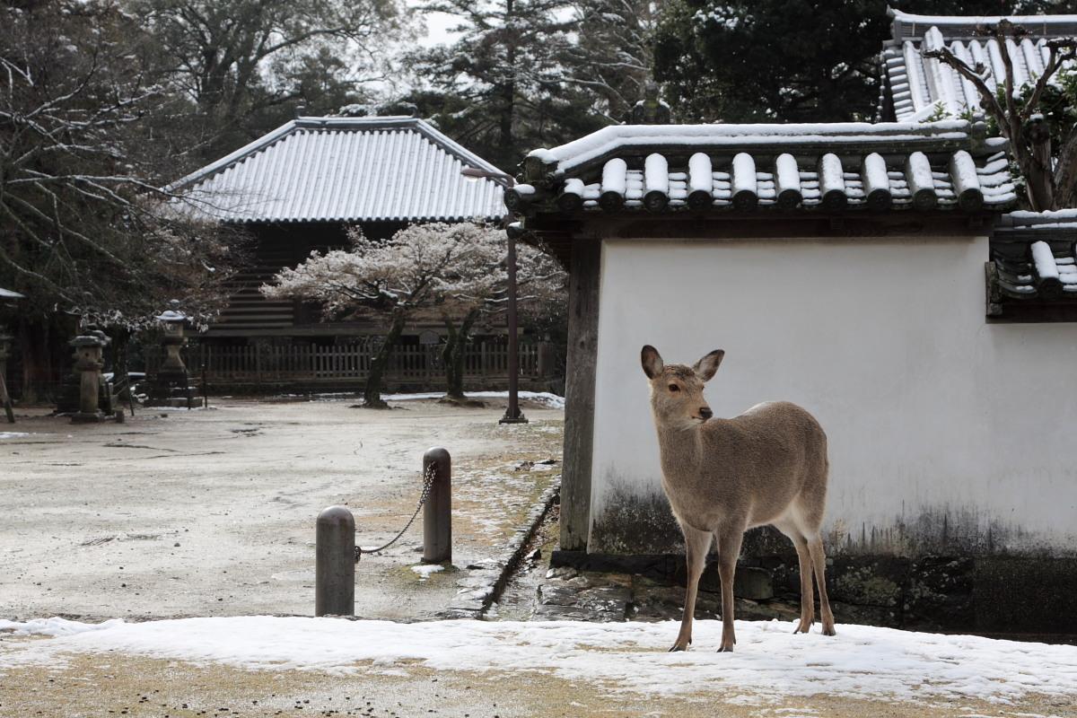 奈良 東大寺二月堂 雪景色 4_f0021869_1124419.jpg