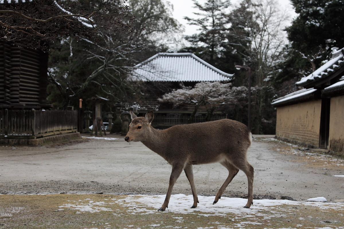 奈良 東大寺二月堂 雪景色 4_f0021869_1142731.jpg