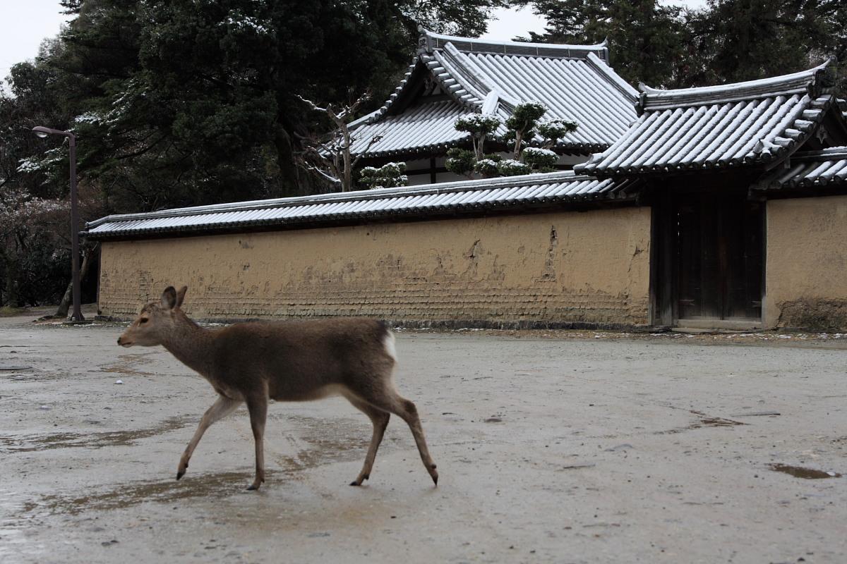 奈良 東大寺二月堂 雪景色 4_f0021869_115338.jpg