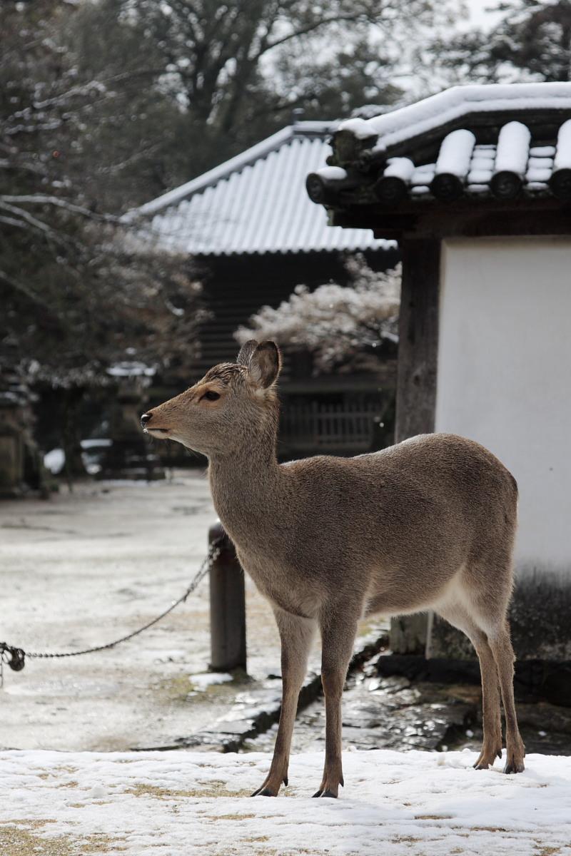 奈良 東大寺二月堂 雪景色 4_f0021869_1153766.jpg