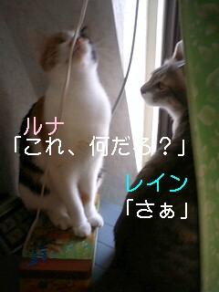 b0112380_11352239.jpg