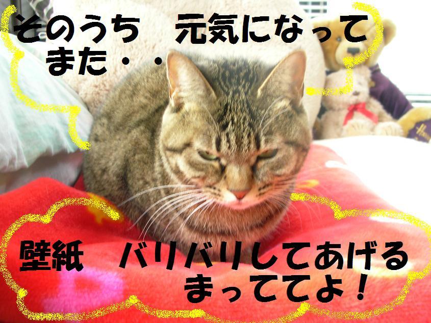 c0139488_1544416.jpg