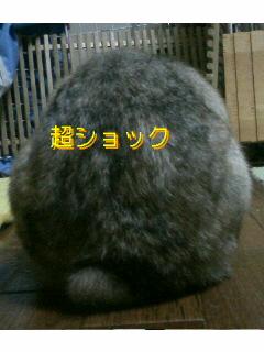 f0104057_221471.jpg