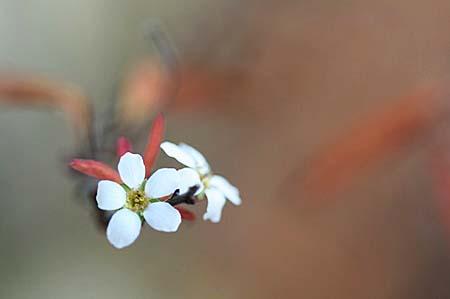 雪柳と、冬咲きクレマチス_f0030085_1449773.jpg