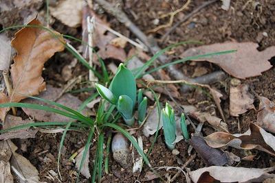 春は確実に近づいている_c0124100_1075295.jpg
